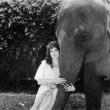 Stockfoto: Young woman hugging the trunk of an elephant