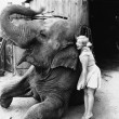 Profile of a young woman hugging an elephant — Stockfoto