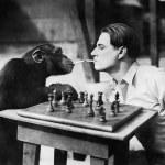 Profil młody człowiek i szympans, palenie papierosów i gra w szachy — Zdjęcie stockowe