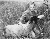 Mujer alimentar a las ovejas con botella — Foto de Stock