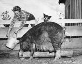 Woman feeding pig — Stock Photo