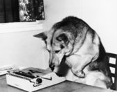 Dog sitting on a chair looking at the typewriter — Stock Photo