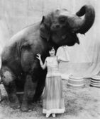 Retrato de una mujer joven de pie bajo un elefante — Foto de Stock
