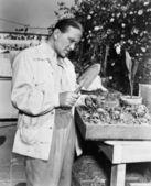 Jardinero examinando las plántulas — Foto de Stock