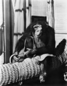 Chimpanzee sitting on basket wearing a monocle — ストック写真