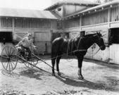 Jeżdżący koń siedzi na wozie — Zdjęcie stockowe