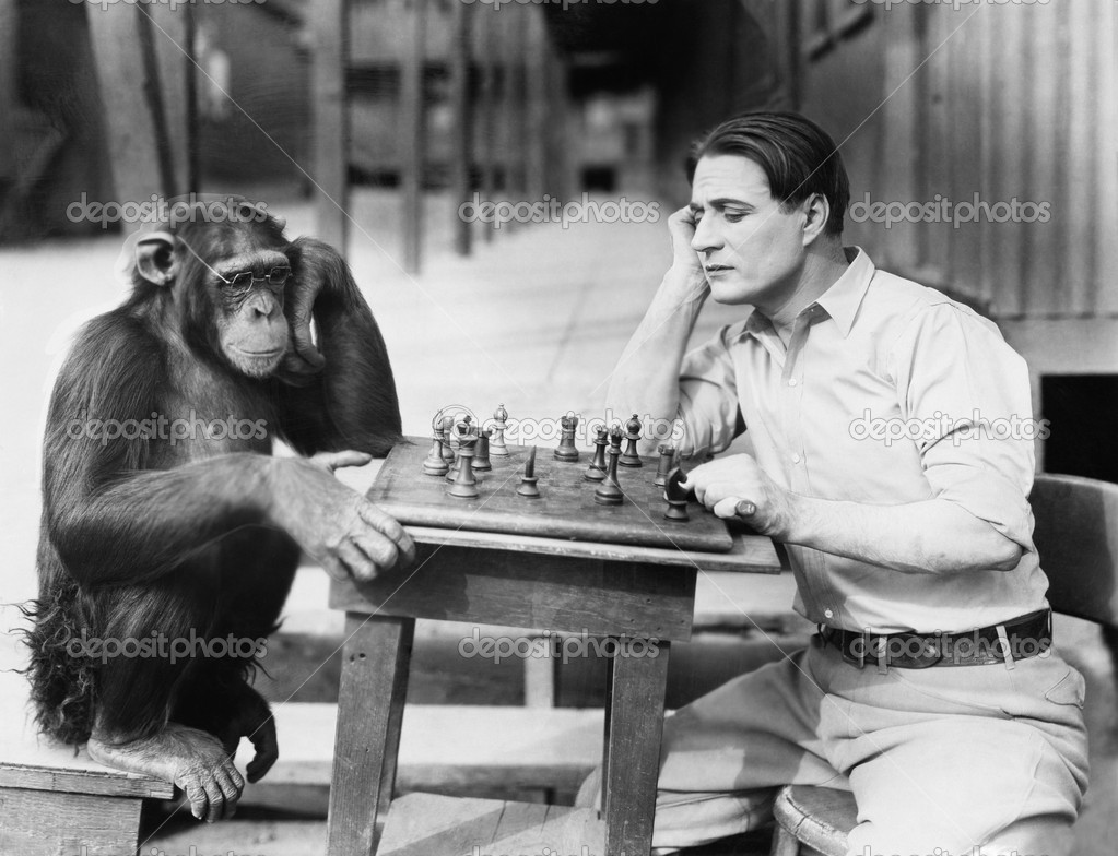 Man playing chess with monkey — Stock Photo #12292767