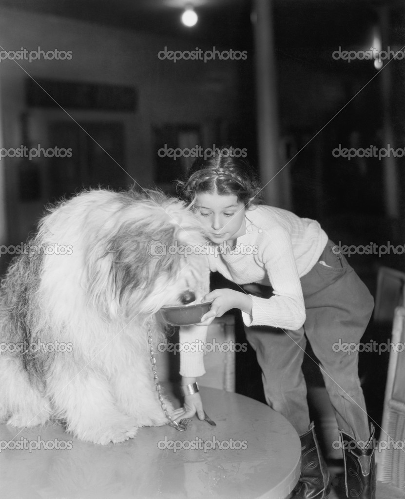 Young woman offering her bearded collie a drink of water    #12298298