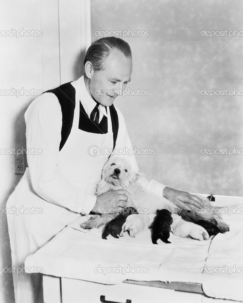 Veterinarian holding a dog with her puppies — Stock fotografie #12298307