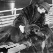 Woman in a fur coat sitting on a bench petting her dog - Foto de Stock