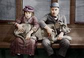 Couple with big dog on laps — Stock Photo