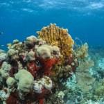 Coral Gardens — Stock Photo #12112165