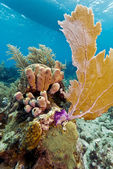 Coral Gardens, Honduras — Stock Photo