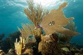 Coral Gardens, Honduras — Stock Photo