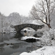 Central Park in snow storm — Stock Photo #12136394