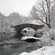 Stock Photo: Central Park in snow storm