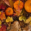 Autumn scene with pumpkins — Stock Photo #12181480