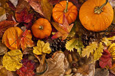 Autumn scene with pumpkins — Stock Photo