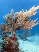 Koralowych ogrodów — Zdjęcie stockowe
