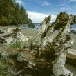Juan De fuca trail beach - Stock Photo