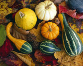 Autumn studio scene with pumpkins — Stock Photo