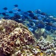 Coral reef panoramic — Stock Photo