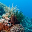 Coral garden Indonesia — Foto Stock