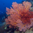 Coral wall off Bunaken island — Photo