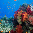 Soft coral reef scene — Stock Photo