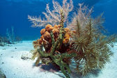 Small coral garden — Stock Photo