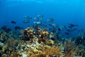 Coral Gardens in Roatan Honduras — Stock Photo