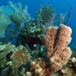 Coral gardens — Stock Photo #12247044