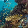 Stock Photo: Underwater menjangisland