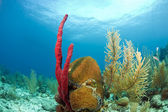 珊瑚の庭 — ストック写真