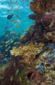 Underwater menjangan island — Stock Photo