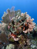 Coral Gardens — Stock Photo