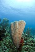 Vase sponge — Stock Photo