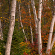 Stock Photo: Autumn in New Hampshire
