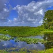 Everglades — Stock Photo