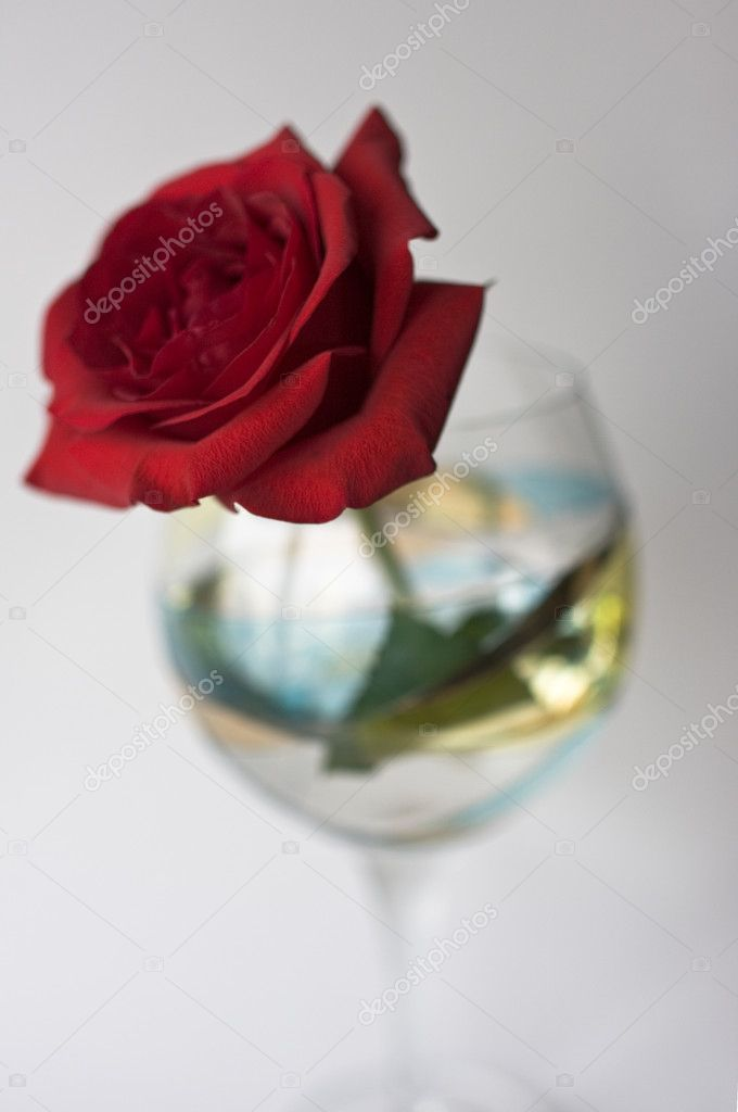 Red rose in large wine glass on white background — Stock Photo #12256985