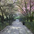 giardini di Central park in primavera — Foto Stock