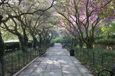 Central Park gardens in spring — Stock Photo