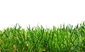 Close up spring green thick grass — Stock Photo