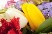 在美丽的花束中的两个郁金香头 — 图库照片