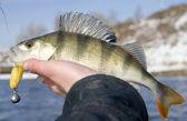 Baixo na mão do pescador — Fotografia Stock