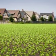 Houses Bordering Row Crops - Stock Photo