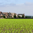 Foto Stock: Houses Bordering Row Crops