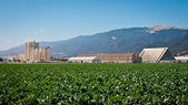 Jordbruket bearbetning anläggning — Stockfoto