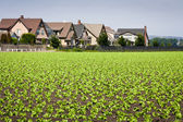 Houses Bordering Row Crops — Stock Photo
