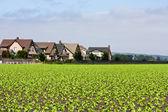 Domy, které hraničí s řady plodin — Stock fotografie